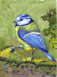 Blue Tit by kashmere1646