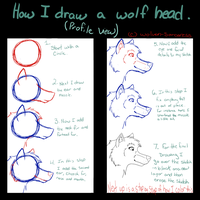.:.How I Draw A Wolf Head.:. PRT 1 by Wolven-Sorceress