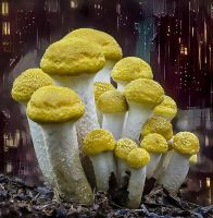 Shrooms by DonkehSalad23