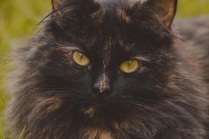 Cat-5294 by Christina-Phillips