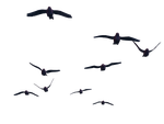 Flying Birds 07 PNG Stock by Roy3D