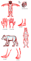 How I Draw Werewolves: Character Anatomy Notes by Pandadrake
