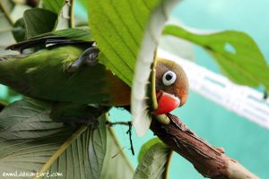 I'll make this branch bald fast! by emmil