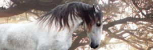 Stable Banner ~ ABHEE by Sniper-Designs221