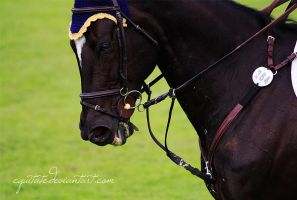Grand Prix I by equitate