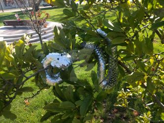 Scalemail Snake - Relaxing in Tree by demuredemeanor