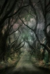 Left Hand Path  by op9m87
