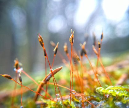Tiny forest by simsunas
