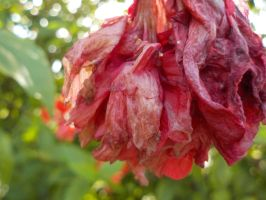 Beautifully Wilting by Taking-Flyte