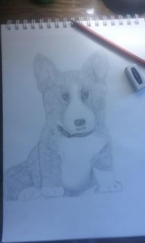 Cute Little puppy by Countrygal4ever