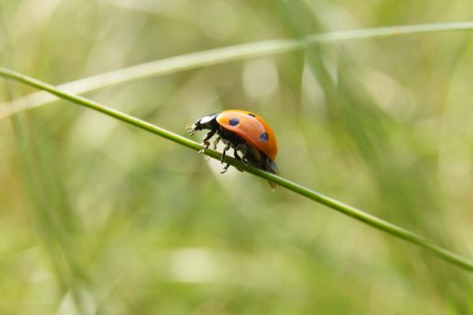 ladybird by Invented-Reality