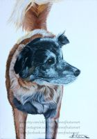 Finished Dog Acrylic Painting by TheLoveofNatureArt