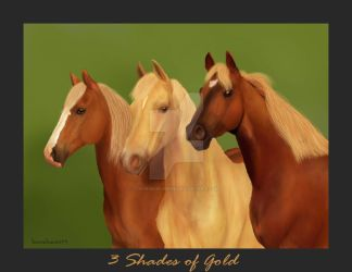 3-shades-of-gold by horsehaven95