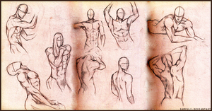 Male anatomy practice by SamanthaLi