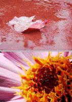 12. Abstractography - Leaf and Flower by Ayaneria