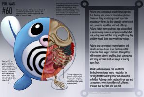 Poliwag Anatomy- Pokedex Entry by Christopher-Stoll