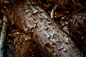 Texture of Bark by Se7enVirtues