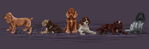 Spaniel Puppies by Tattered-Dreams
