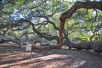 Angel Oak3 by PirateLotus-Stock