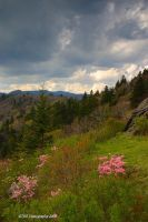 Early Spring BRP by TRBPhotographyLLC