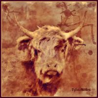 Highland Cow by Tyleen-Barker