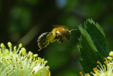 Bee by Carburator