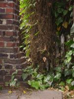 Brick and Ivy by uhlrik