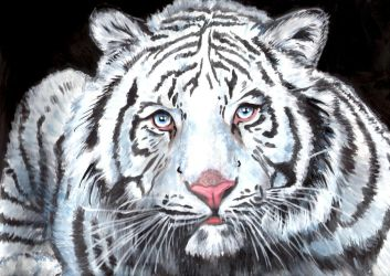 Tigre blanco by Julia-EVS
