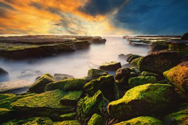 Mossy by Michaelthien
