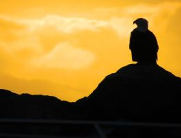 The Golden Eagle At Sunset by wolfwings1