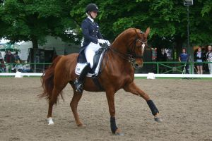 Dressage Flying Change Stock 03 by LuDa-Stock