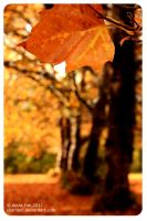 Autumn in BC by sharvani
