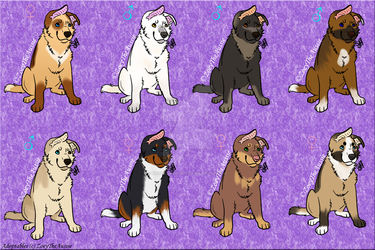 Mutts Adoptables [1/8 open] by ZoeyTheAussie