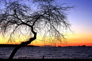 Under the big tree by Faytte