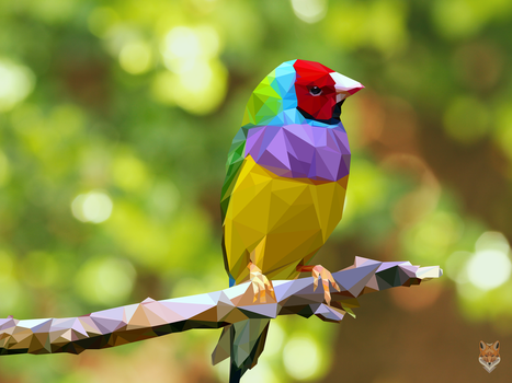 The colorful bird / vector / diego campos by diego1a