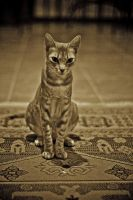 I'm Egyptian by Yousry-Aref