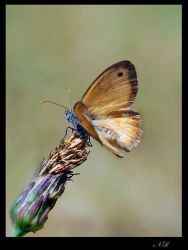 Butterfly2 by Nataly1st
