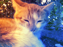 Cat - photo 02 by LiLaiRa