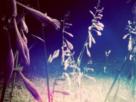Gardening At Night by Thomwade