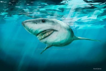 carcharodon carcharias by PAVELOWSKY