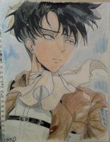 Levi by Barking--Cat