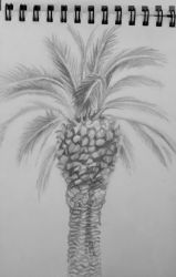 Italian palm-tree study by Fisktoffla