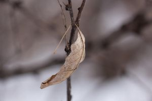 Winter leaf by AndreyCherkasov