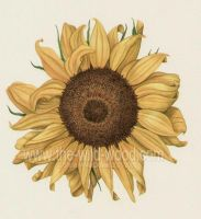 sunflower by WildWoodArtsCo