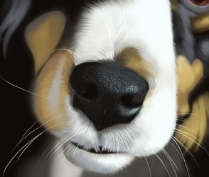 Scoot's Booper by Followthepaws