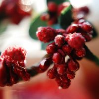 Christmas decorations by BlueColoursOfNature