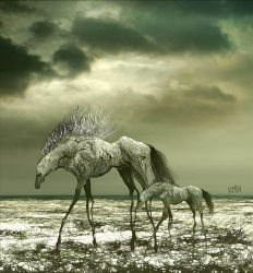 WILD HORSES 3 by aspius