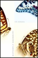 Butterflies Macro 01 by nighty-stock