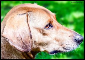 MY HUNGARIAN DOG by IME54-ART