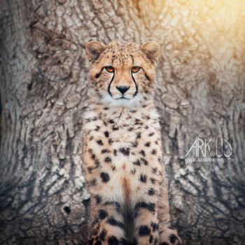Guepard by Arkus83